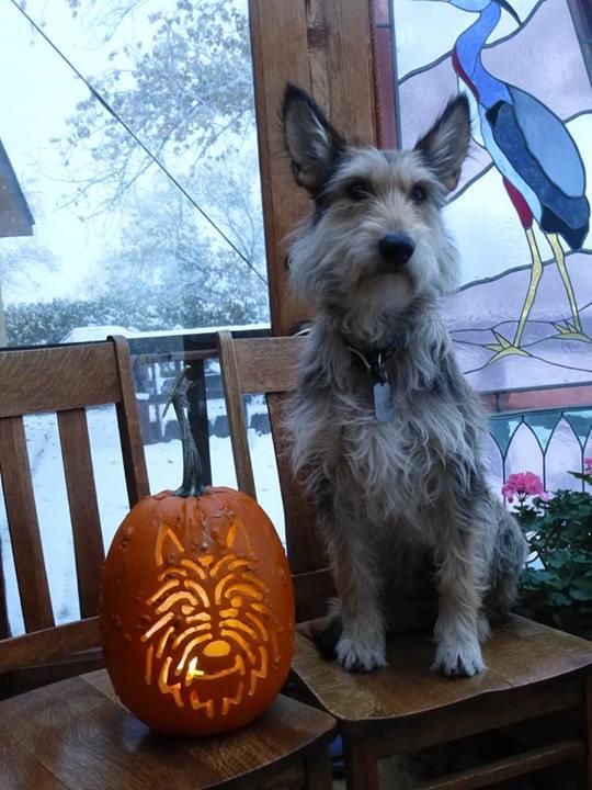 pumpkin-carving-contest-2013-Marta-Amundson1
